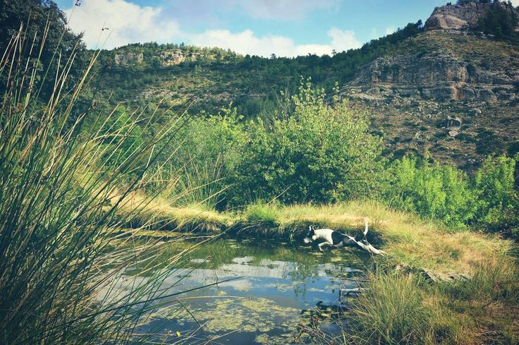 La balsa, Benigüengo #sierradenguera #enguera #ayora #valencia #estiu #pitbull #jump #dog #mountain #llibertat #nikon #photography http://tipsrazzi.com/ipost/1507104930447754557/?code=BTqT_MClAU9