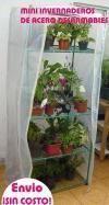 Semillas para siembra de arboles ornamentales, bonsai, hortalizas, pastos, carnivoras, cactaceas, agroquimicos, sustratos, productos agroquimicos, semillas de cactaceas, semillas de arboles ornamentales, semillas para bonsai, semillas de hortalizas, semil