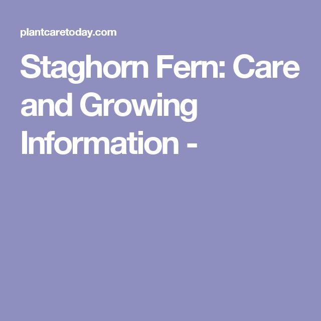 Staghorn Fern: Care and Growing Information -