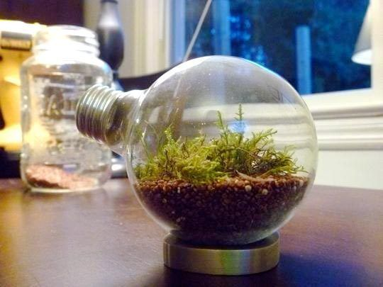 Great instructions :)): Diy Ideas, Repurpo Lights, Apartment Decor, Trav'Lin Lights, Terrariums, Lightbulbs Terrarium, Apartment Therapy, Plants Materials, Lights Bulbs