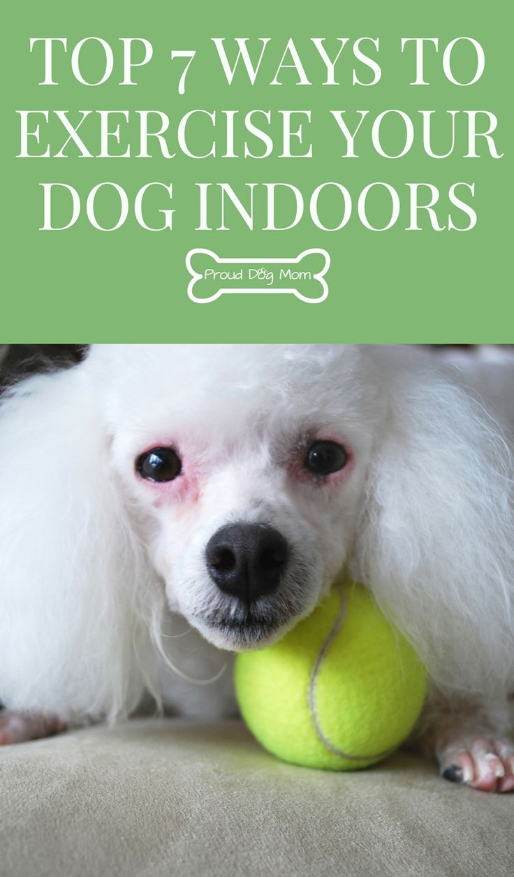 Top 7 Ways To Exercise Your Dog Indoors | Dog Health | Dog Training Tips |