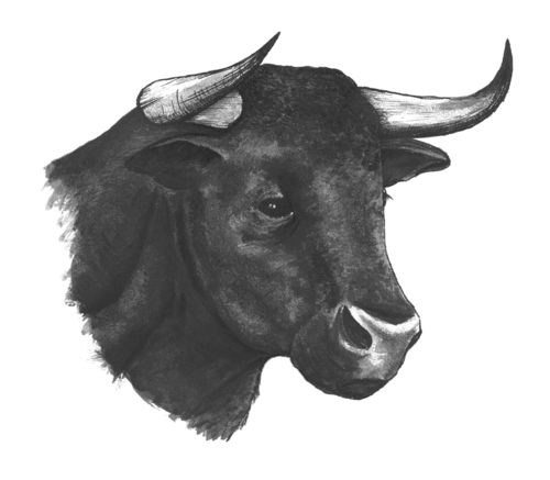 El torero - bull drawing for Temperley London LFW invitations