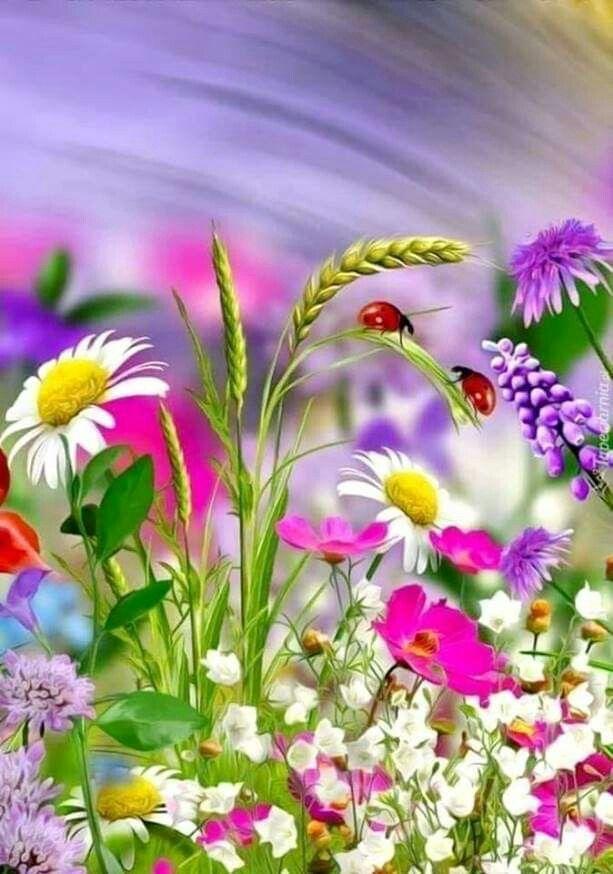 Сделать, открытки доброго утра цветы летние