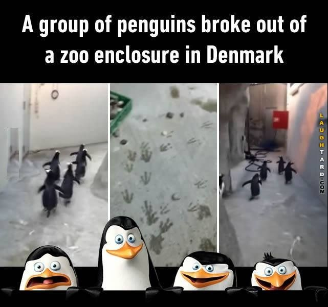 Group of penguins broke out
