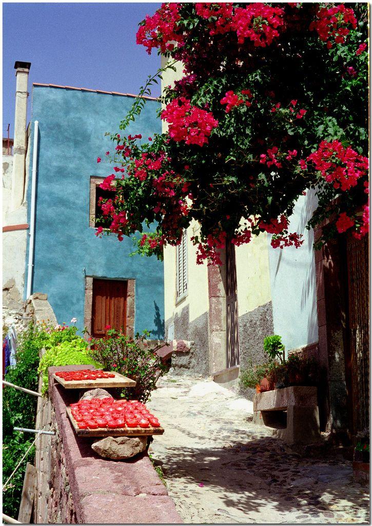 Sun-dried tomatoes, Sardinia, Italy