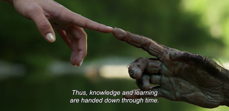 "― Lucy (2014)""Thus, knowledge and learning are handed down through time."""