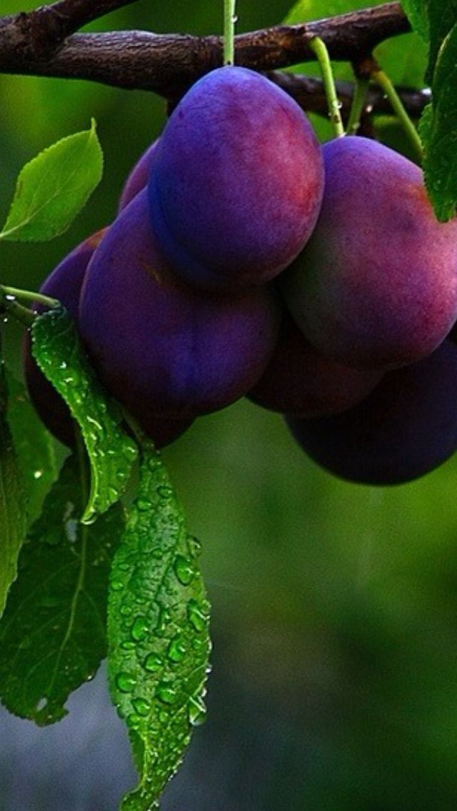 Plum is a gorgeous, subdued purple-pink that is the perfect blend of femme & fierce.. << plum, grape, clods enough...