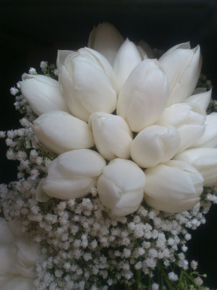 Bridesmaid bouquet of french tulips with a collar of white gypsophillia