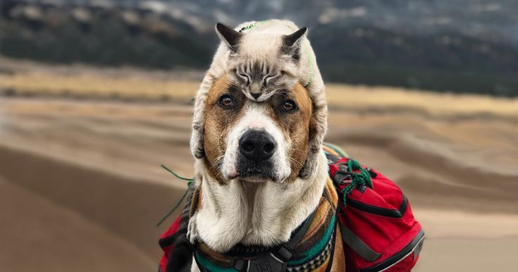 This Cat And Dog Love Travelling Together, And Their Pictures Are Absolutely Epic - #Funny