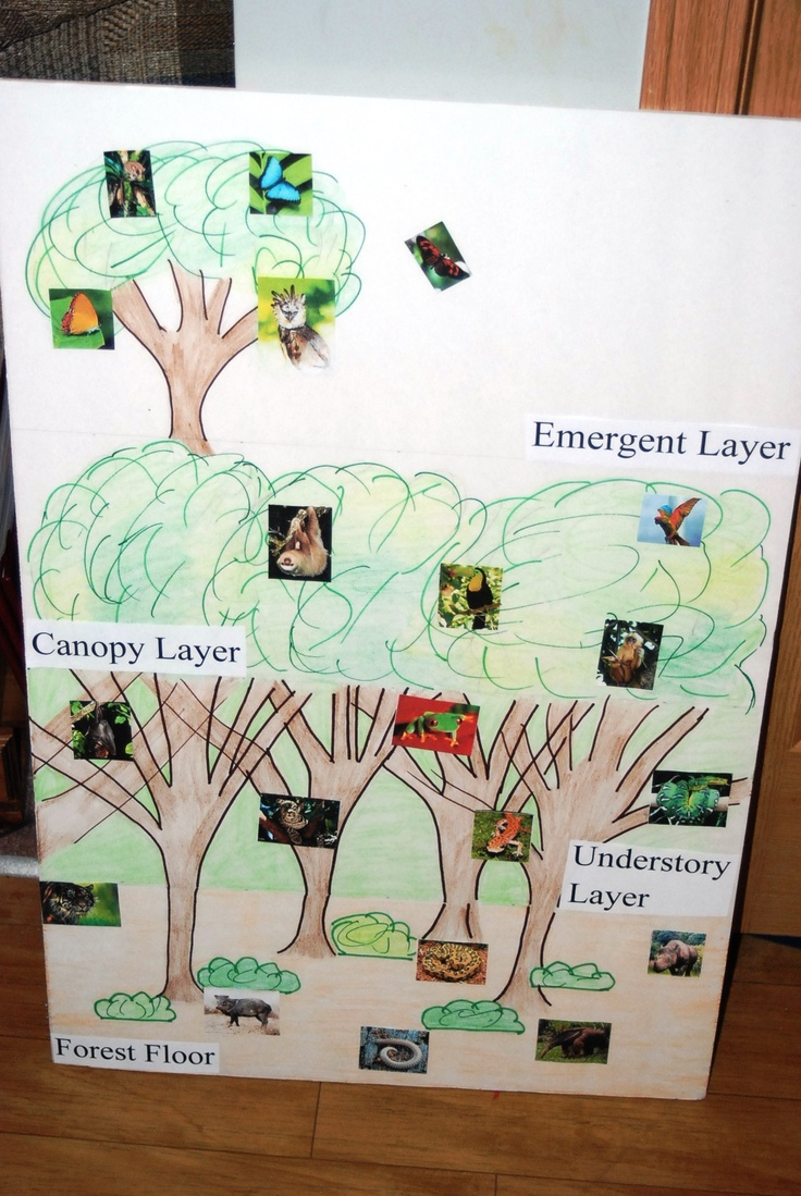Rainforest Poster I Created Outline Kids Colored In