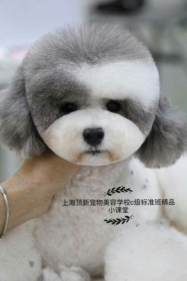 asian inspired dog grooming