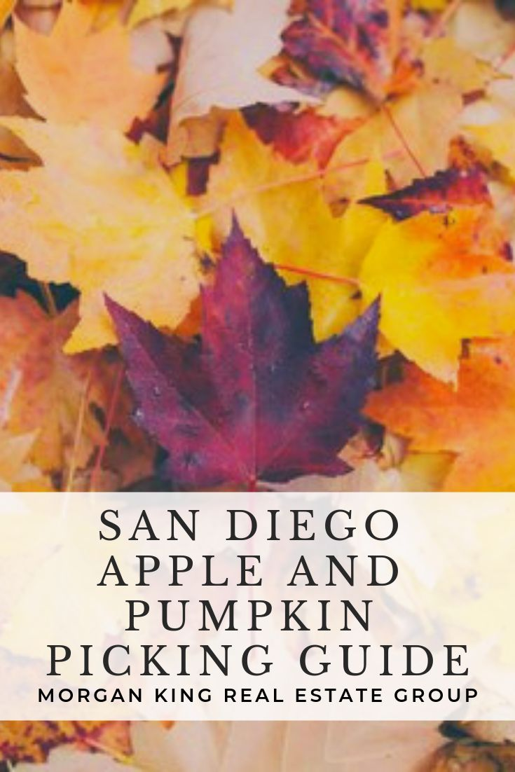 Mk Life Tips San Diego Apple And Pumpkin Picking Guide Apple