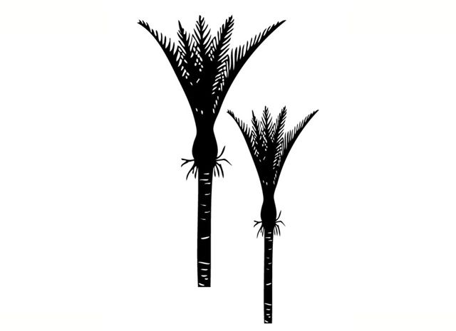 Nikau Palms 2 image