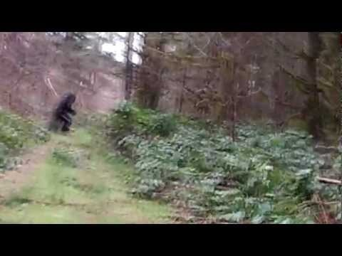bigfoot hindu singles One occupational hazard of reporting on unexplained phenomena: you can always count on waking up in the morning to find an email from someone swearing that they've just seen bigfoot, the.