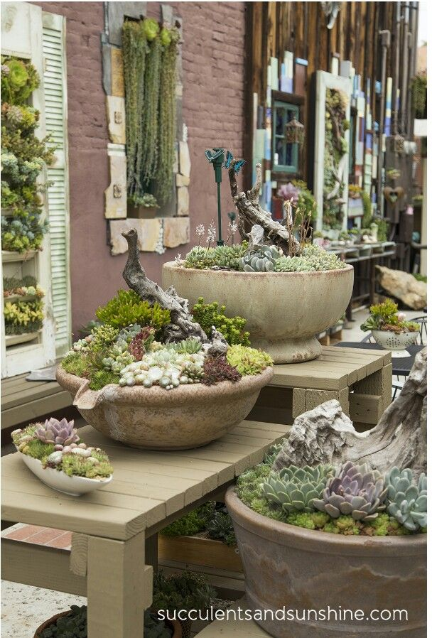 Succulents in containers...designs by Peter Loyola of Succulent Cafe