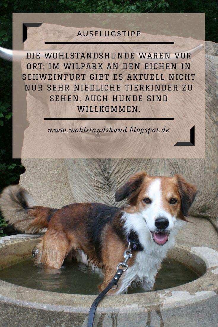Die Wohlstandshunde zu Besuch im Wildpark an den Eichen in Schweinfurt.