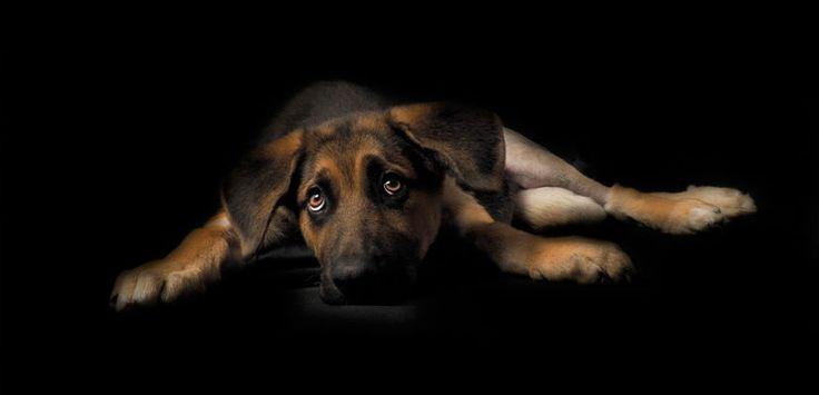 Fotopets, proyecto contra el abandono animal - http://www.mundoperros.es/fotopets-proyecto-contra-el-abandono-animal/