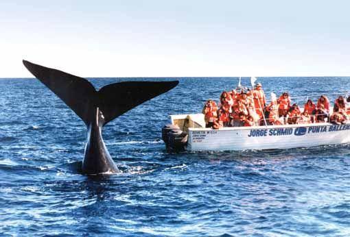 Puerto Madryn, Argentina: paraíso para ver ballenas