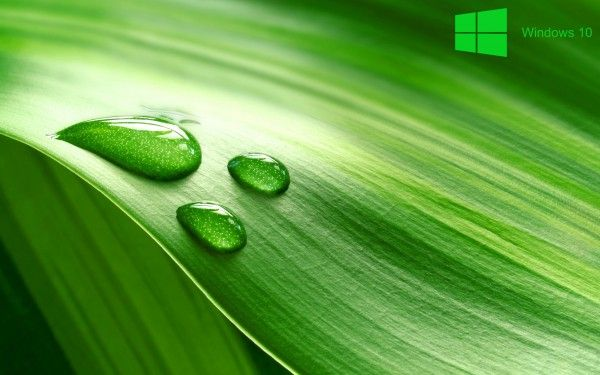 Windows 10 Desktop Background with Green Leave in Macro