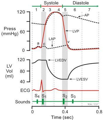 Systole/Diastole pressures