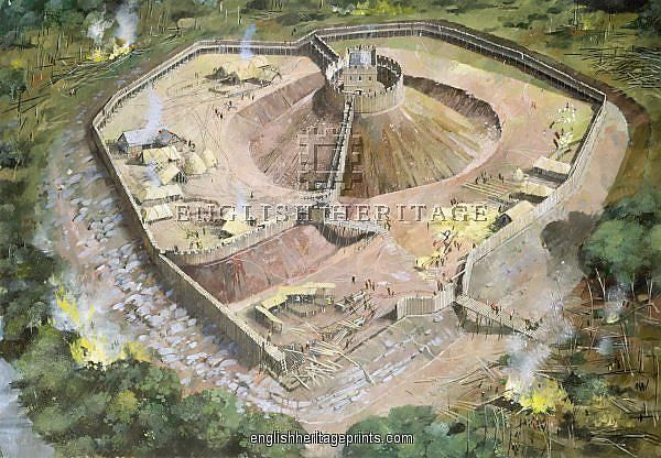15 Best Images About Motte And Bailey Cattle On Pinterest