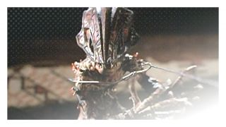 Puppet Master 4 (1993) http://terror.ca/movie/tt0107899
