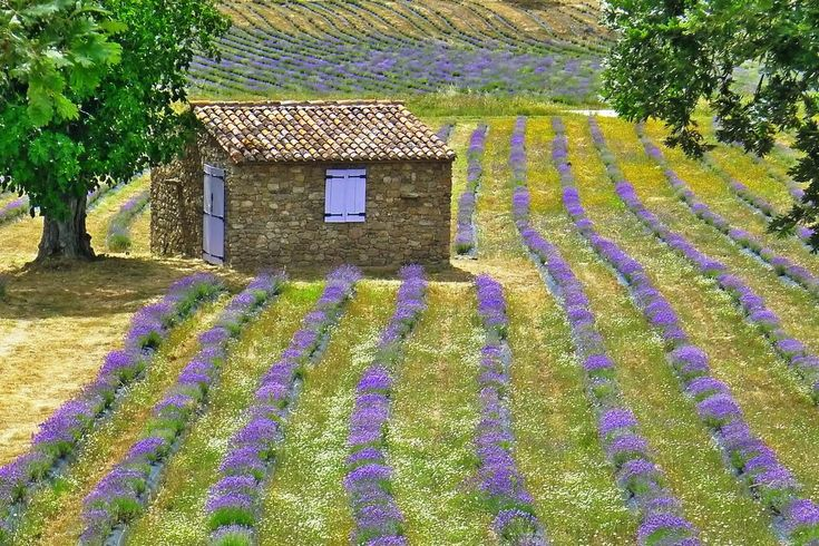 Farm stay Quinta das Lavandas, Castelo de Vide, Portugal - Booking.com