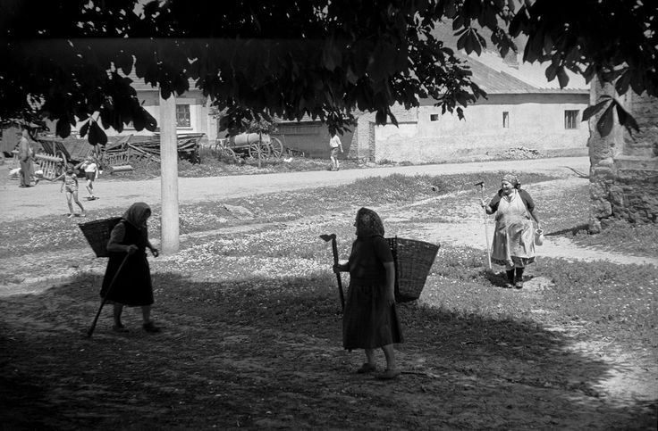 Elderly women go to work making hay in the Český Brod agricultural cooperative in Czechoslovakia, 1956. The cooperative has 6.500 hectars of land made up of former private holdings and 1500 farm workers.
