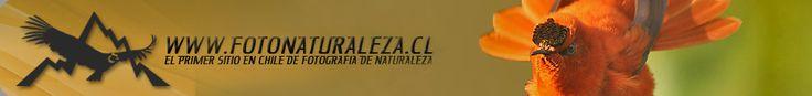 www.FotoNaturaleza.cl