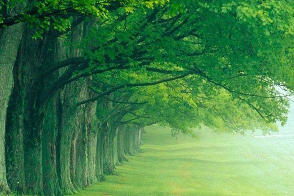 Green Cute Garden and beautiful environment...