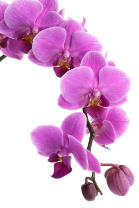 Orchids #WhatSheWants