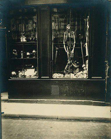 Eugene Atget. Zoologist's (Taxidermists) Shop, 1927