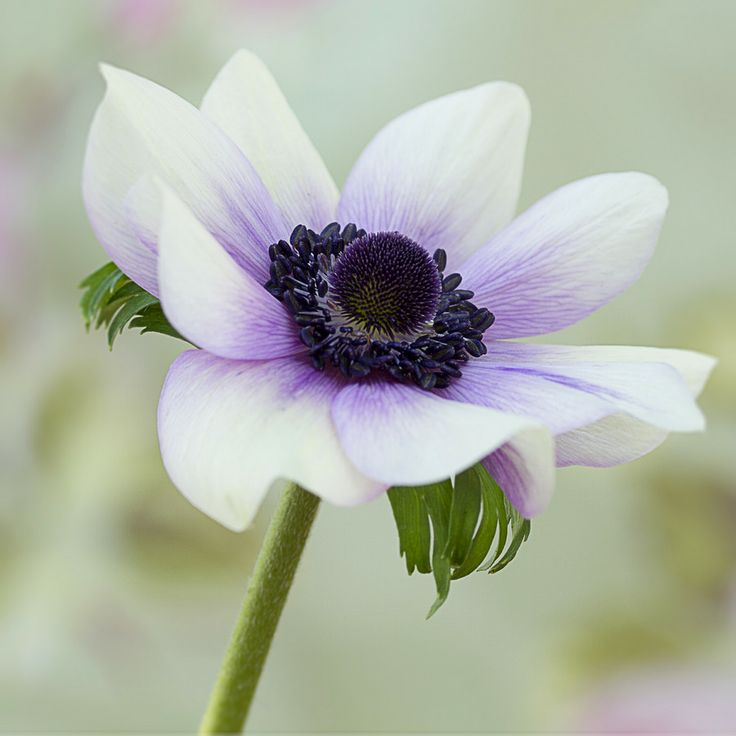 Miss Anemone by Moira  Swift on 500px