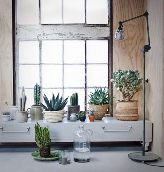 Indoor garden/ potted plants