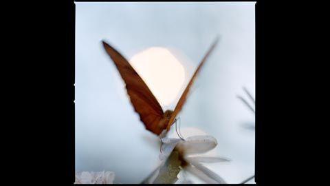 Anna Claren: fjäril