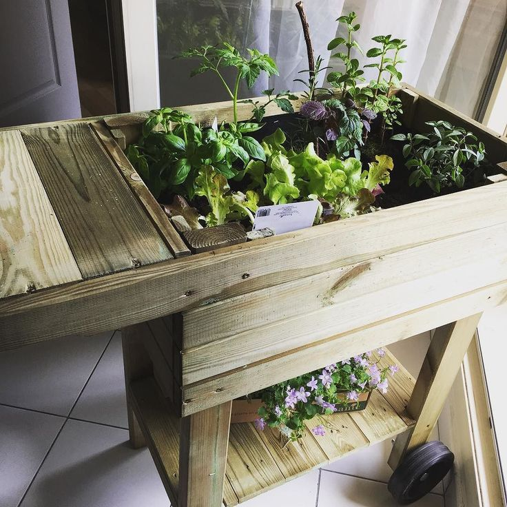 Les aromatiques  #apartmentgarden #greenthumb #porchgarden  #オーガニック #有機野菜 #ハーブ #ベランダ菜園 #初心者 #プラントベース #ベジタリアンライフ #ハーブのある暮らし #すくすく育ってね #ローフーディー #petitpotager #potagerdebalcon #botanic #bio #herbe #debutante #ensoleillé #vegetalien #cru #vegetarien #plantbasedlife #plantpower #planteater #youarewhatyoueat #france #croixrousse #organicgardening