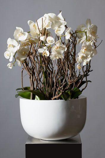 Artiplant bloemdecoratie - orchidee en deco-takken, natuurlijke deco