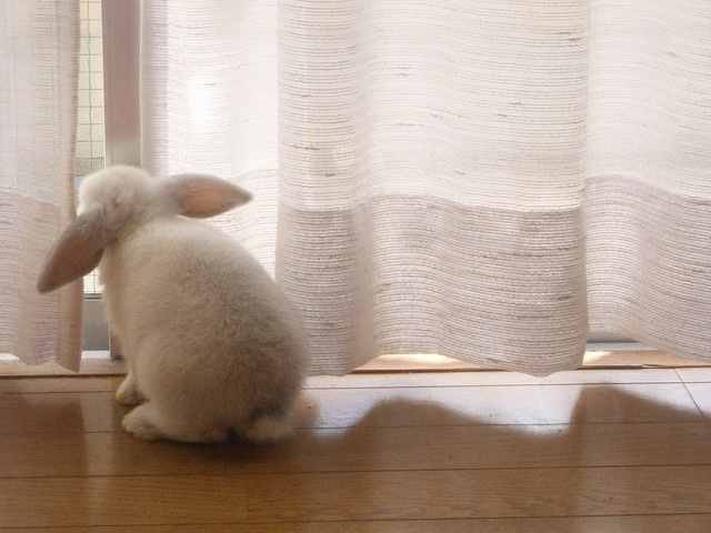 little white bunny hopping outside minding my own business... Look there's a butterfly!