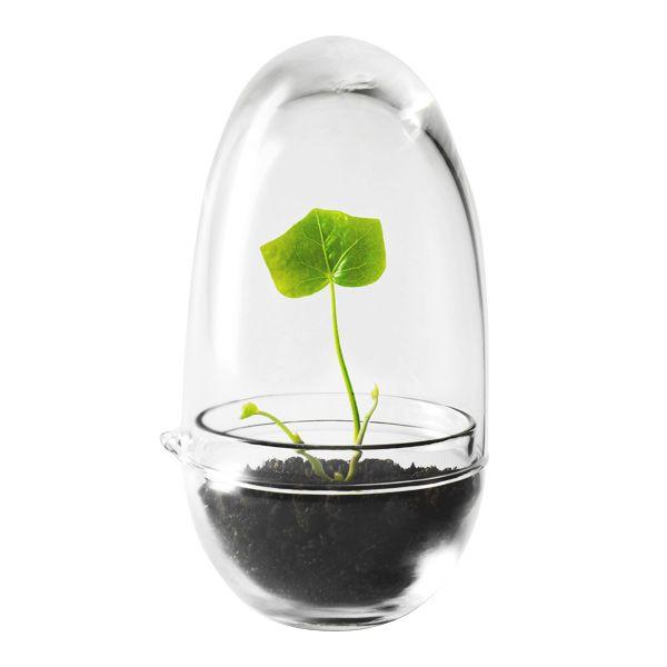 Grow mini greenhouse