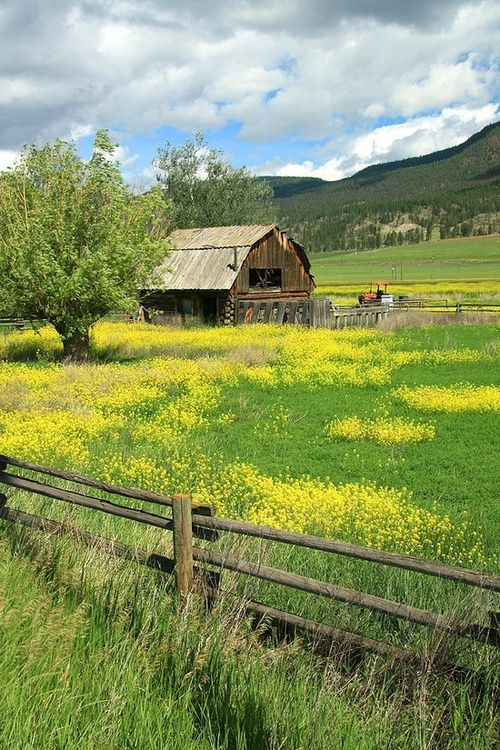 A favorite thing to do on the Ranch? Riding thru blooming mustard out on the back 40...