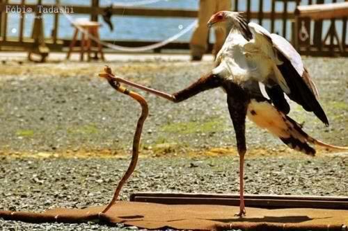 Kung fu bird