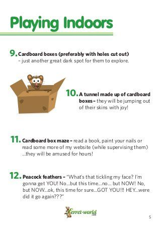 101 Ferret Games & Homemade Ferret Toys