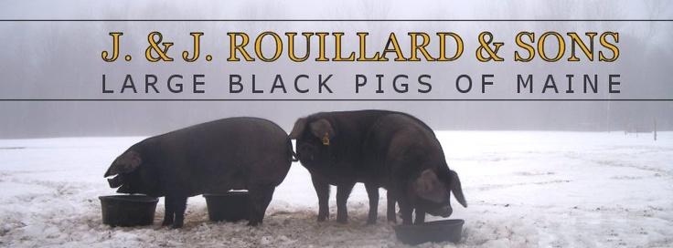 Large Black Pigs of Maine.