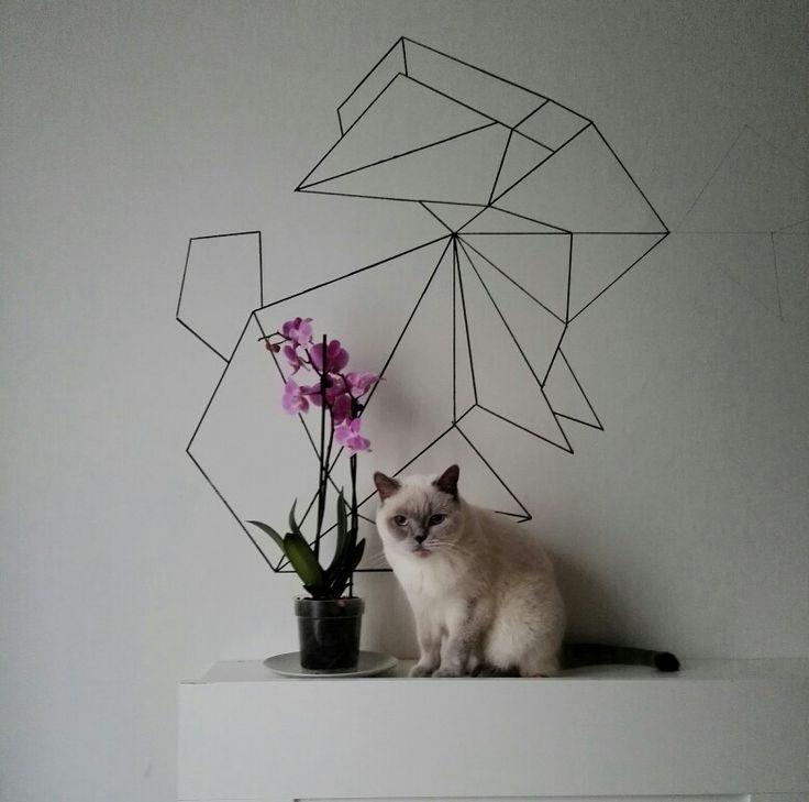 #geometric #cat