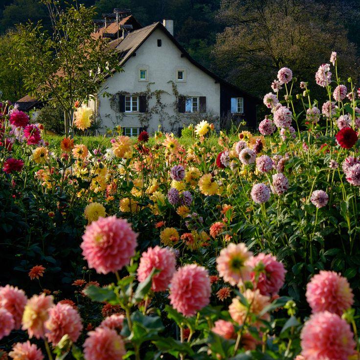 Swiss farmhouse, garden of Dahlias by Tim Shirey - Photo 126220725 - 500px