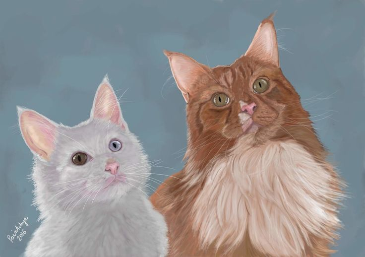 Ghost and Sprocket cats portrait, digital art by Paintchya.com. Digital art, made to order. Art as gift. Custom made art. Printable custom made art for mugs, t-shirts, journals, home decor etc. paintchya@gmail.com #cat #kitty #cutecats #kitten #giveaway #free #cutecats #wacom #paintchya #cutepetclub #catsofworld #catloversclub #srslycute #kot #chat #ネコ #furbaby #kitten #catportrait #catpainting #digitalart #digitalmedia #digitalartist #fluffycat #purrfect #mainecoon #whitecat #fluffycat
