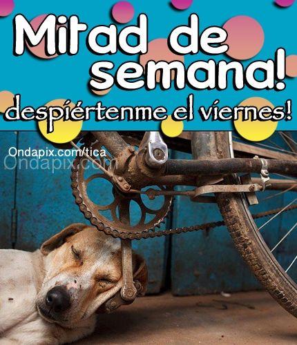 Mitad de semana #miercoles #animales #perros