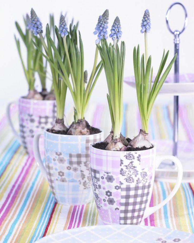 Die besten 25+ Blühende pflanzen Ideen auf Pinterest Blühende