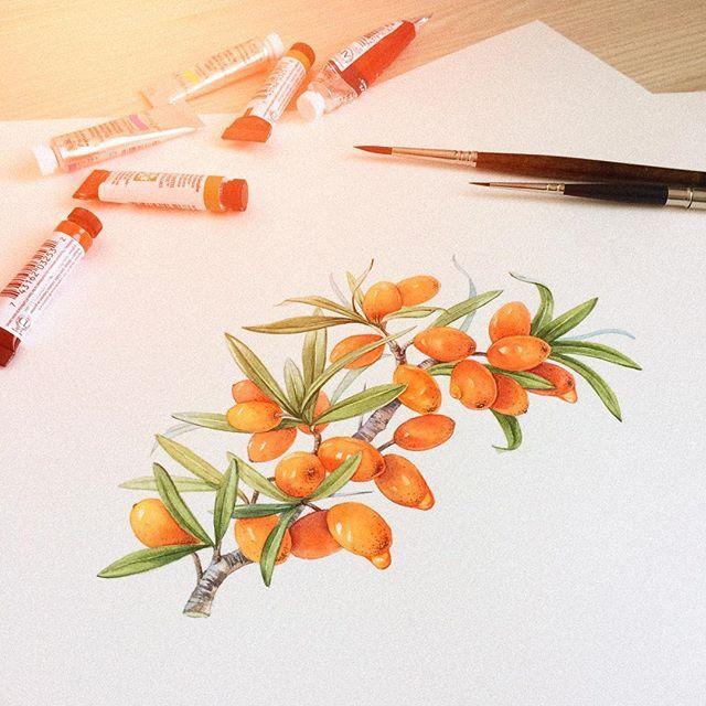 #watercolor i#llustration #art #packaging #packagingdesign #food #aquarelle #акварель #иллюстрация #упаковка #этикетка #иллюстрацияназаказ #акварельназаказ #облепиха