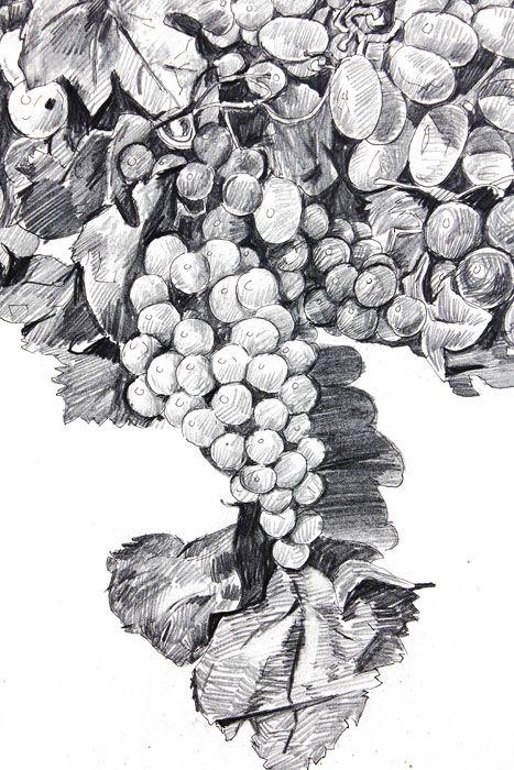 grape pencil - Google ძებნა